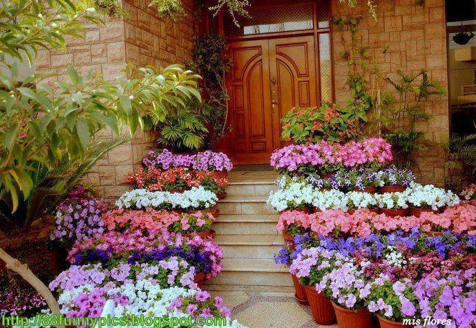 7 photos of the great tips for an amazing home garden