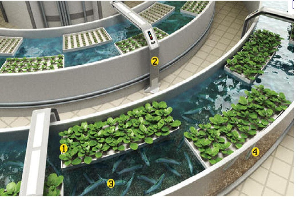 AquaPonics in North Carolina