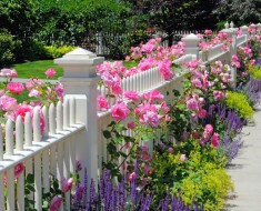 Backyard Flower Garden Pink Decoration
