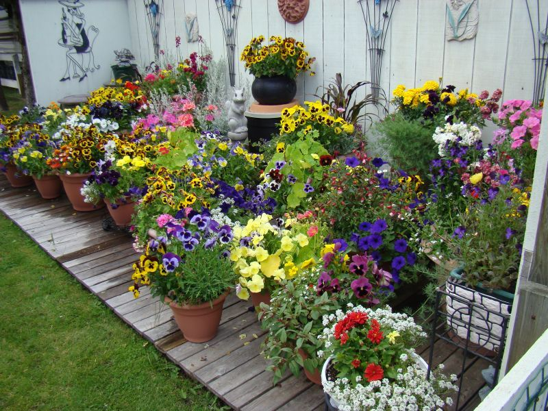 container gardening ideas for summer wilson rose garden