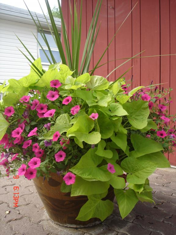 Container Gardening Of Flowers Decor