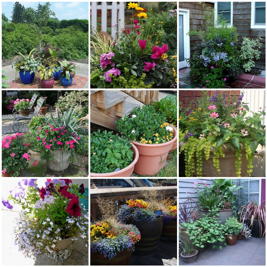 Container Gardening Wilson North Carolina