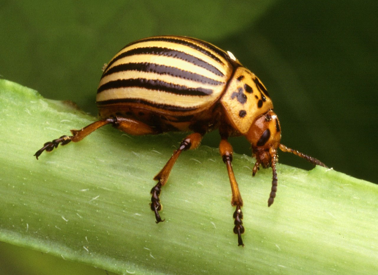 Controlling Animal Pests