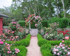 Cottage garden design with roses