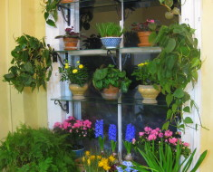 Creative Garden Window Ideas