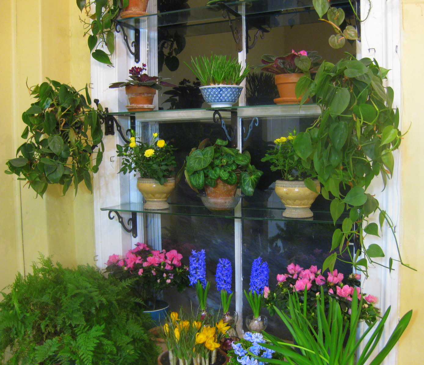 Creative Garden Window Ideas – Wilson Rose Garden