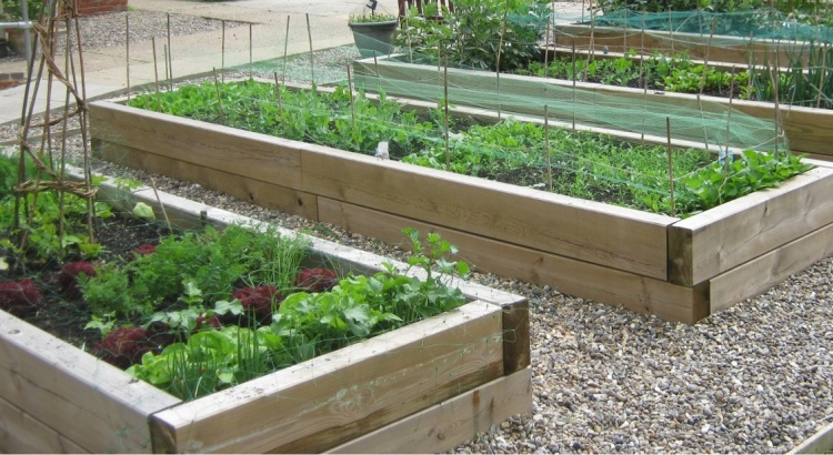 Delicieux Growing Vegetables In Raised Beds