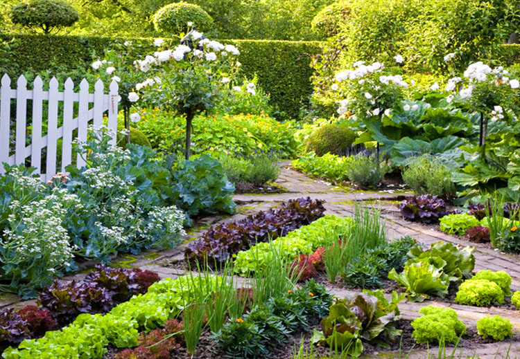 Integrate Your Edible Plants with Flowers
