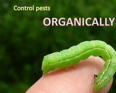 Landscaping Pest Control