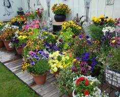 Pretty Container Gardening