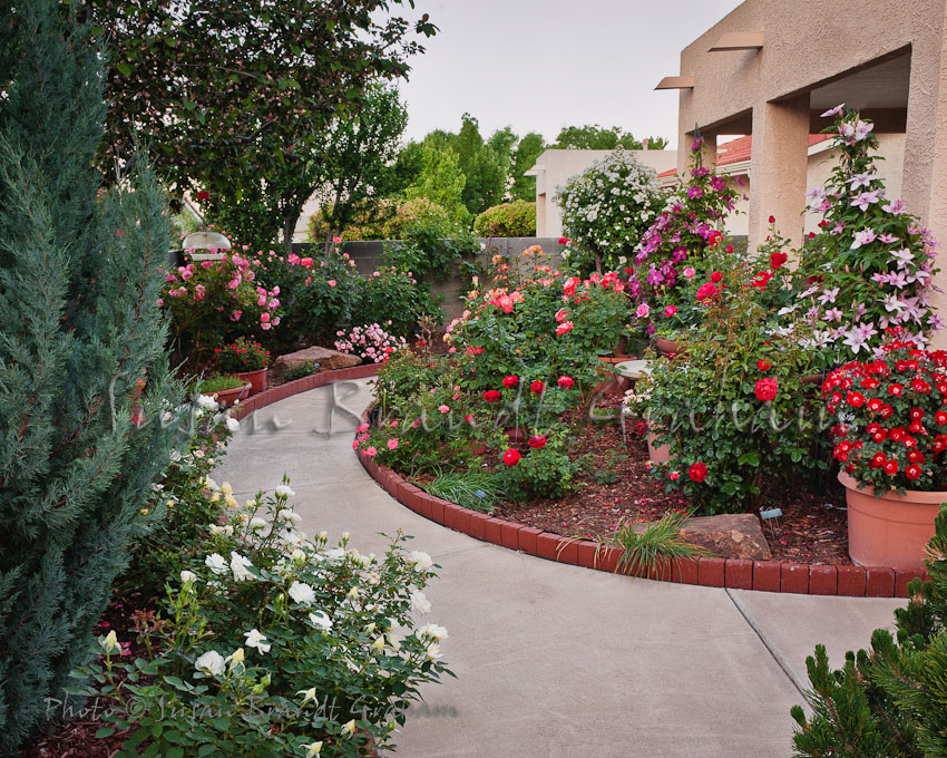 Small landscaping with roses