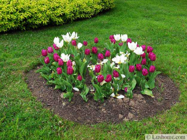 10 photos of the 5 spring landscaping ideas - Spring Planting Ideas
