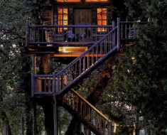 Tree House You Would Want