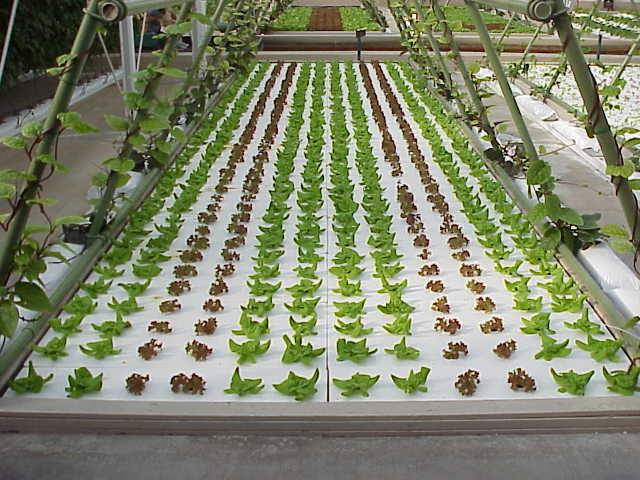 about hydroponics systems