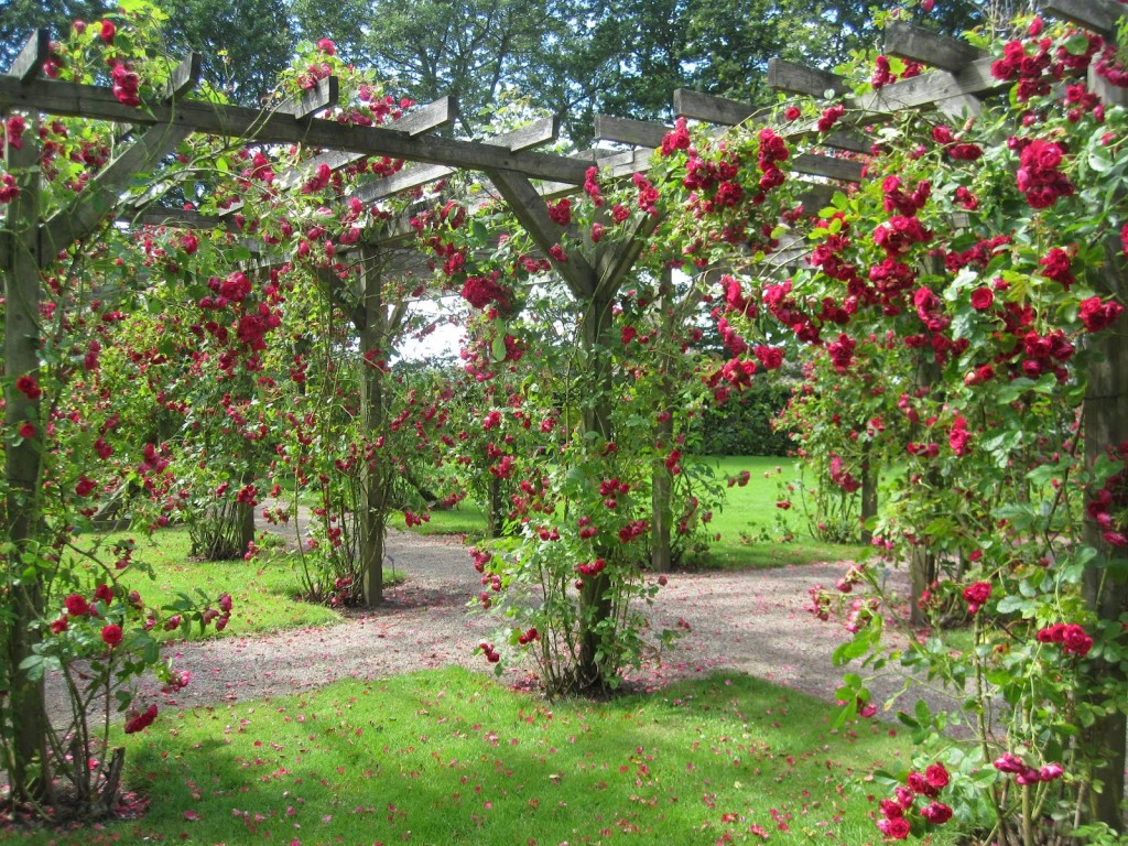 beautiful rose gardens