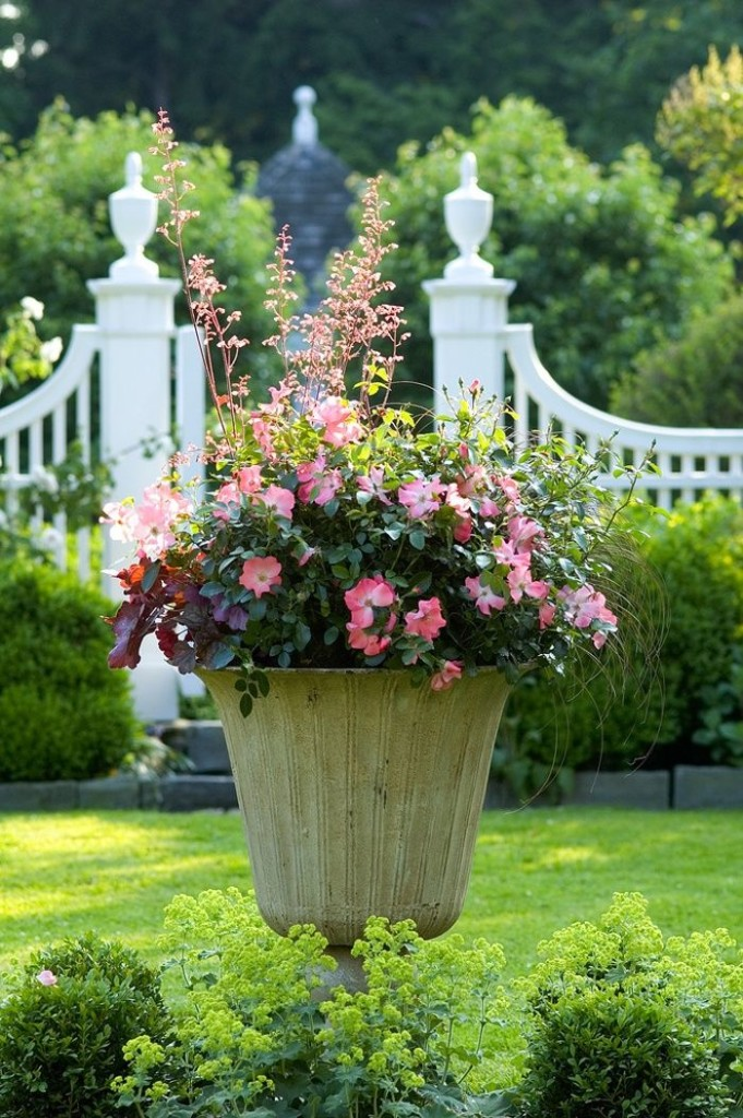 container gardening roses