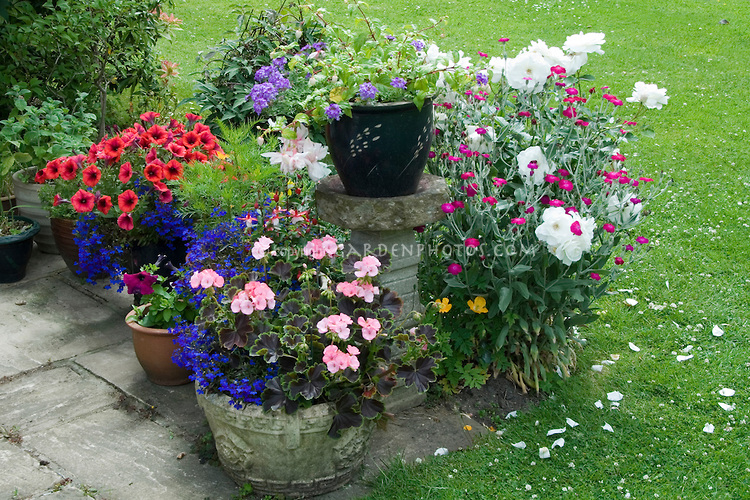 containers for roses
