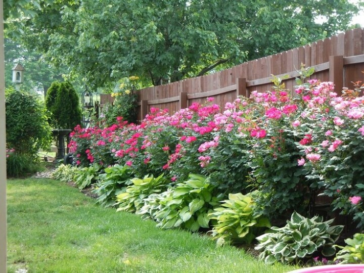 decorating your garden with roses