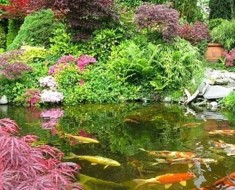 fishing pond design wilson