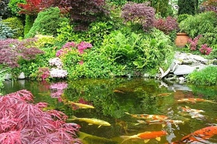 Fish pond design to alive the backyard look wilson rose for Types of pond design