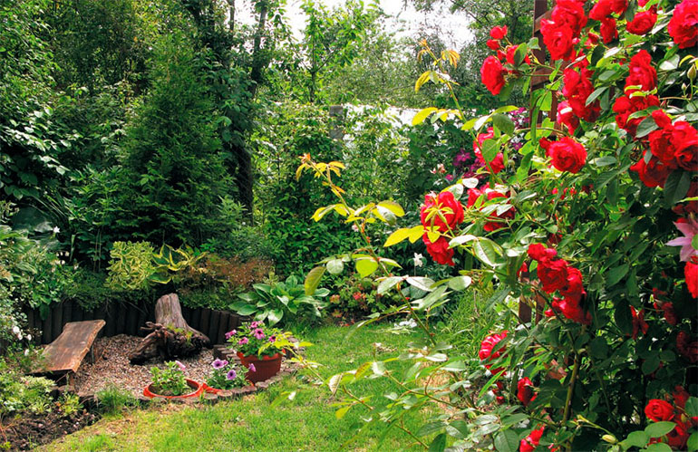 garden design with roses in wilson