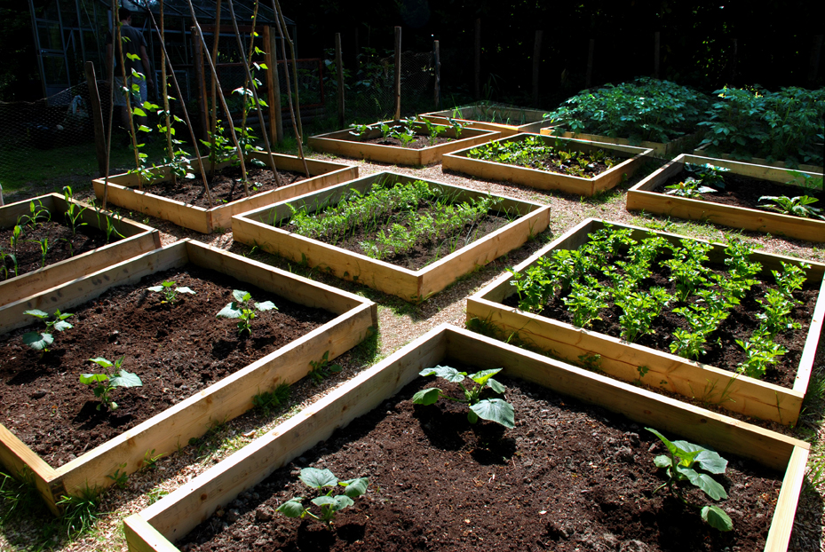 Raised Bed Vegetable Garden Guide Wilson Rose Garden