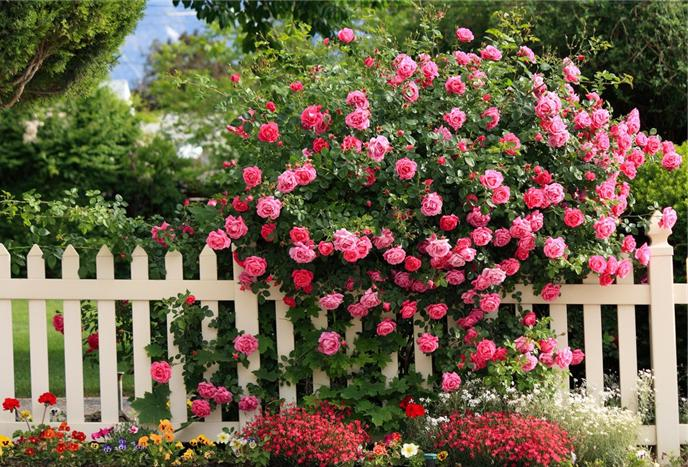 ideas small garden design with roses