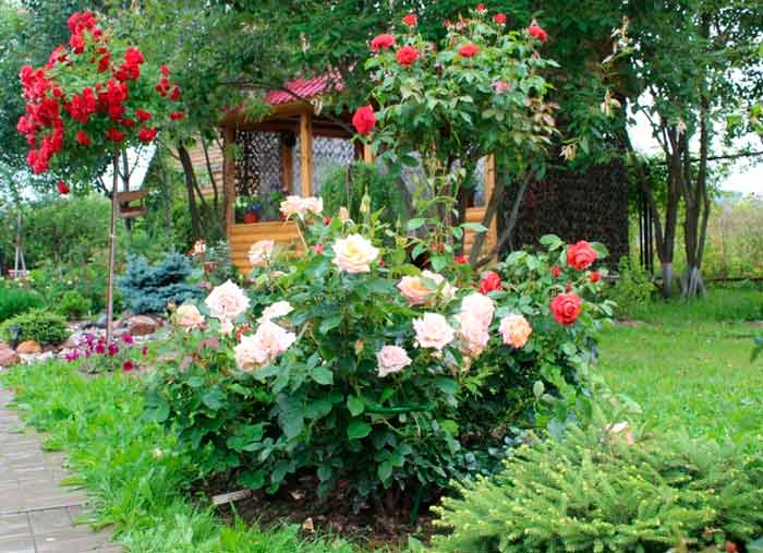 landscaping with roses ideas