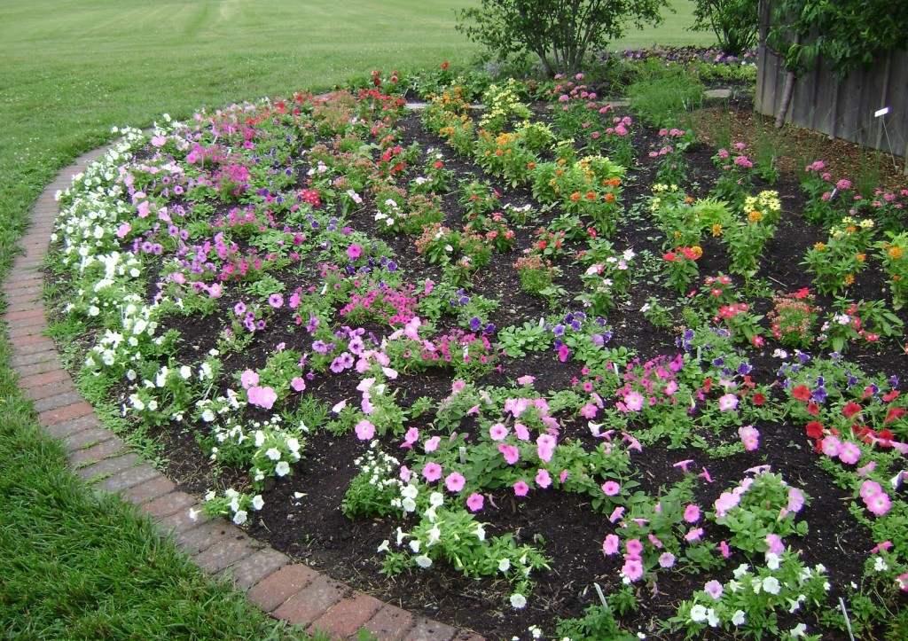 Landscaping design with roses wilson rose garden for Plant garden design