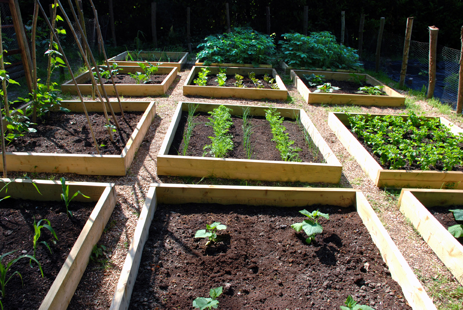 raised vegetable garden beds - Raised Garden Bed Design Ideas