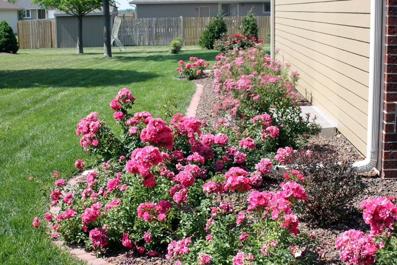 rose landscape design