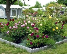 small garden design with roses