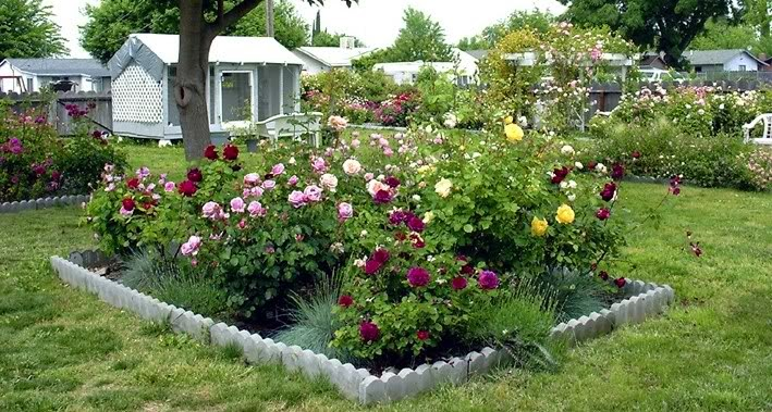 Small garden design with roses Wilson Rose Garden