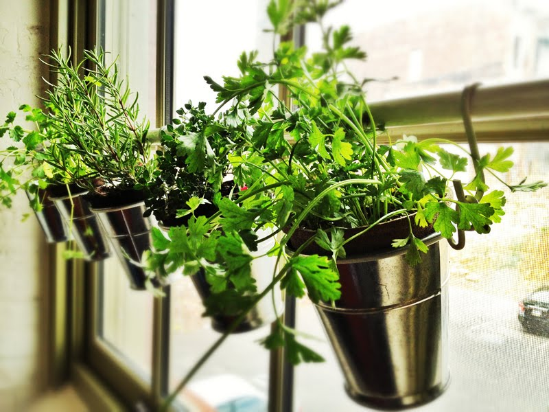 window herb garden planter