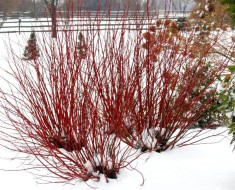 Choosing Winter Plants