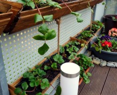 Container Gardening Of Strawberry Decoration