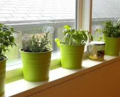 herb planter windowsill