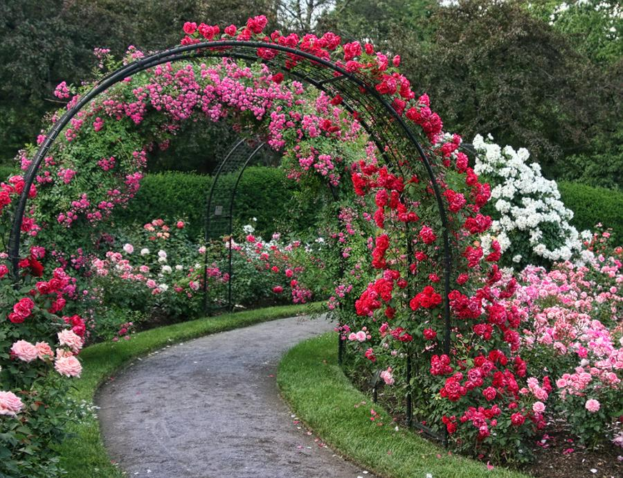 landscaping with roses garden