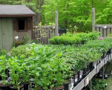 purchasing landscaping plants