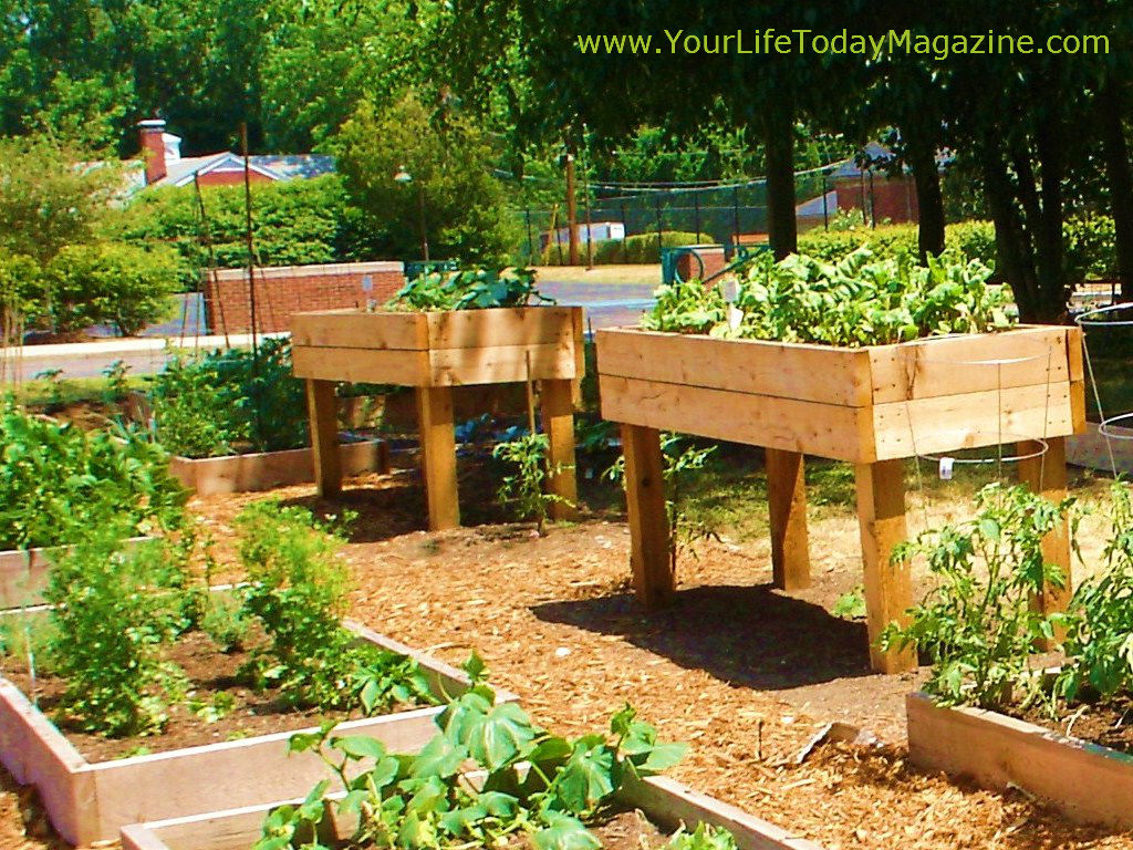 Walk In Garden Box: Raised Garden Beds Designs You Can Finish In Less Than A