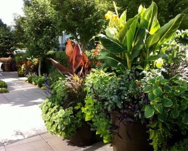 tropical landscaping in north carolina